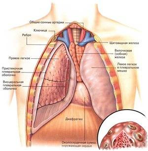 очищение лёгких от паразитов