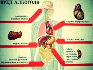 путь алкоголя в организме человека