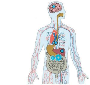 как алкоголь попадает в организм